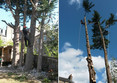 Image 2 for Edinburgh Tree Surgeons
